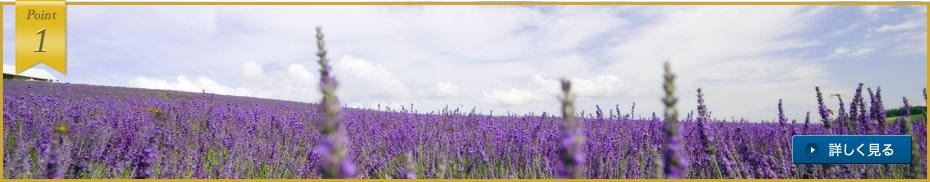 夏の富良野観光の拠点に最適。北の大地の壮大な自然を心ゆくまで満喫。