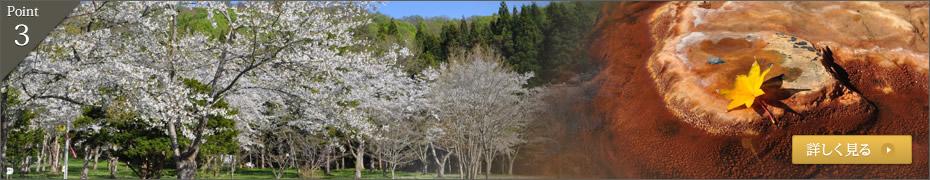 四季の移ろいを感じさせる風景に心癒される