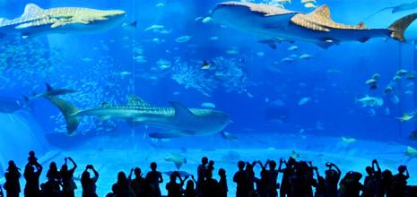 美ら海水族館すぐ♪人気観光地に近い便利な立地