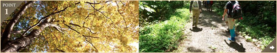 北海道の豊かな自然を満喫♪国の天然記念物にも指定されている歌才のブナ林